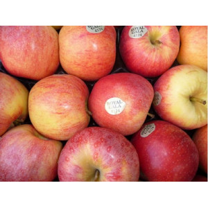 Gala apples, the kilo