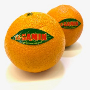 Navel Oranges, the kg