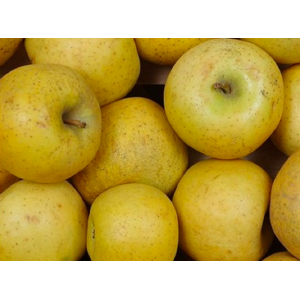 Chanteclerc apples, the kilo