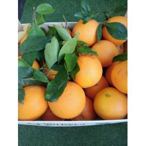 Orange douce , le kilo