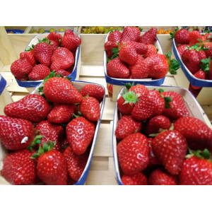 carpentras strawberry, by...