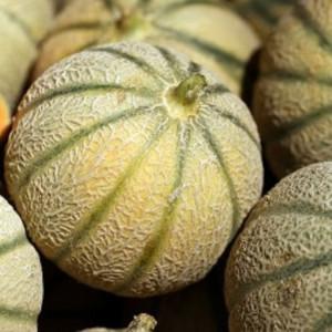 Melon porto, the piece...